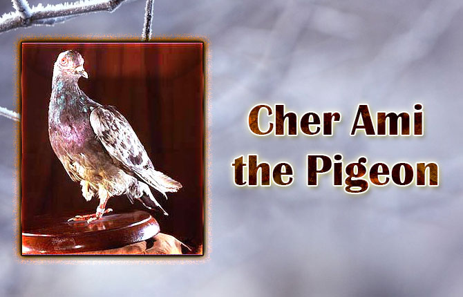 Cher-Ami-the-Pigeon