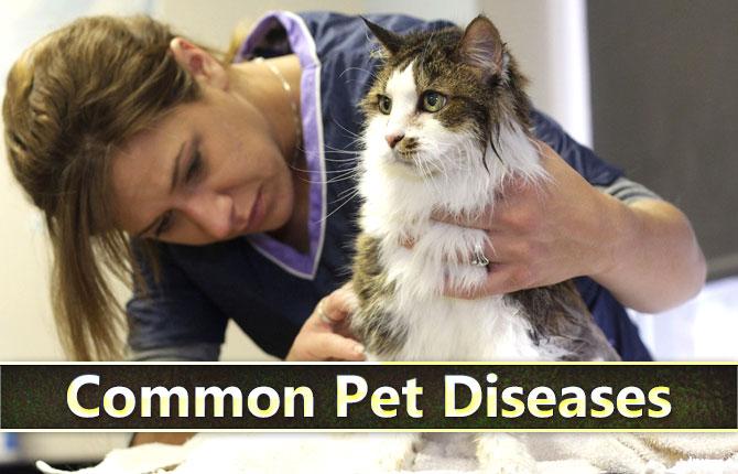 Photo of Common Pet Diseases