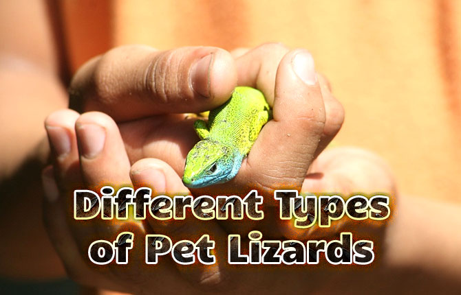 Different-Type-of-Pet-Lizards