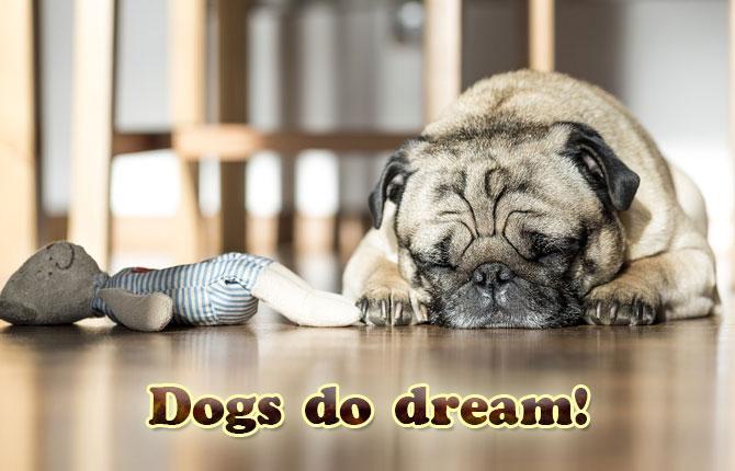 Dogs-do-dream
