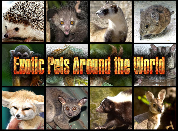 Exotic Pets Around the World