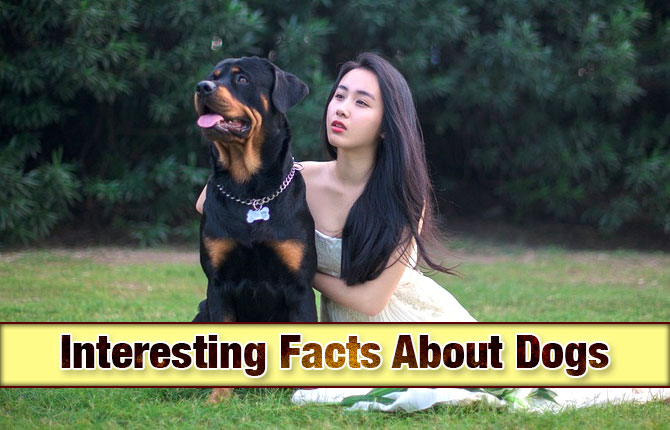 Photo of Interesting Facts About Dogs