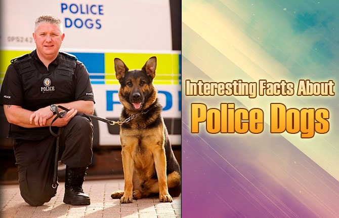 Interesting-Facts-About-Police-Dogs