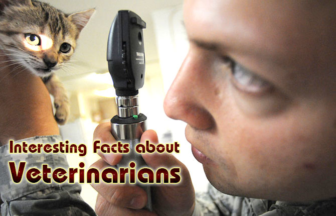 Photo of Interesting Facts about Veterinarians