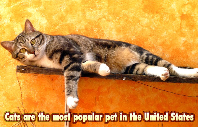 Most-popular-pets-in-US