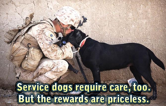 Service-dogs-require-care
