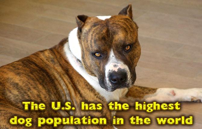 US-highest-dog-population-world