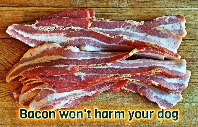 7-bacon-wont-harm-your-dog