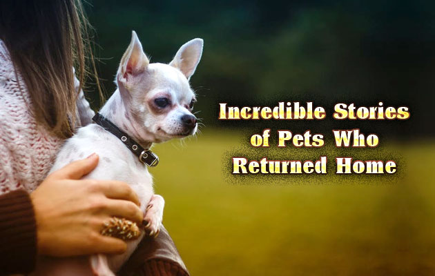 Photo of Incredible Stories of Pets Who Returned Home