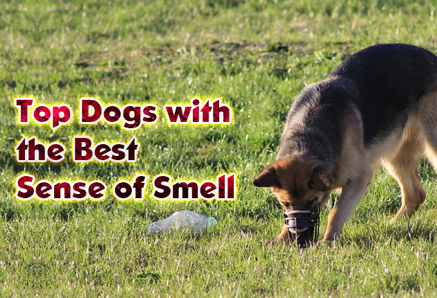 Photo of Dogs with the Best Sense of Smell