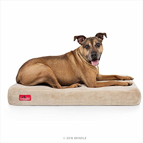 Brindle Solid Memory Foam Orthopedic Dog Bed