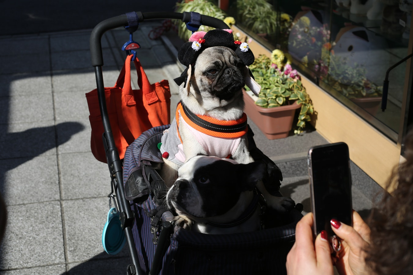 Photo of 5 Things You Need for a Pet-Friendly Car