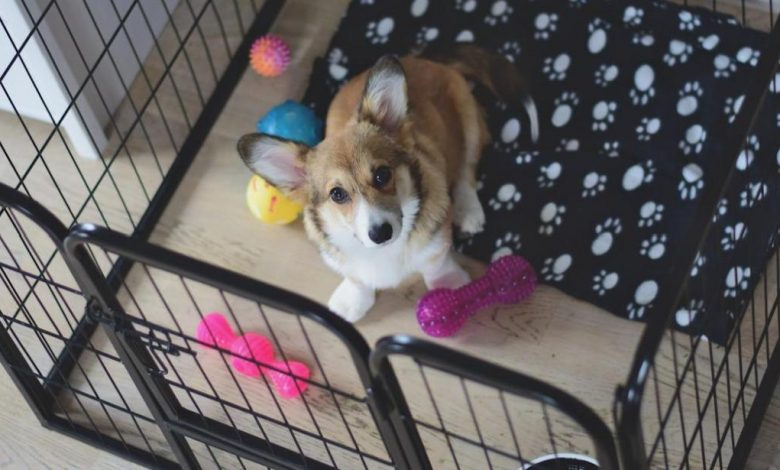 Photo of Puppy Property: How to Get Your Home Ready For a New Puppy