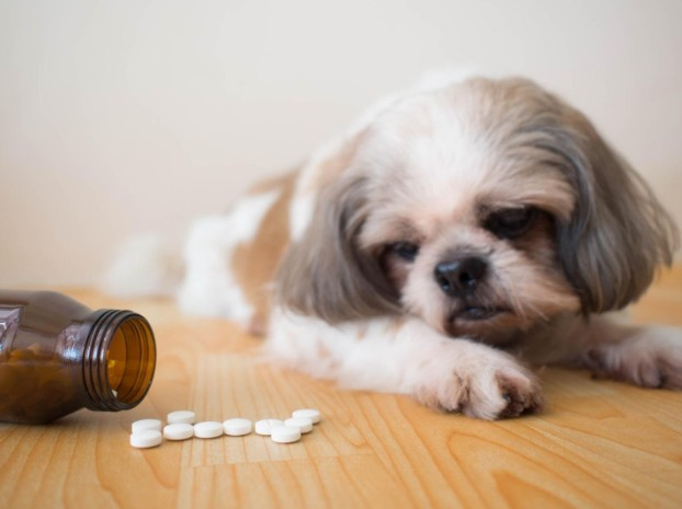 5 Best Dog Supplements to Help Your Pet Stay Healthy