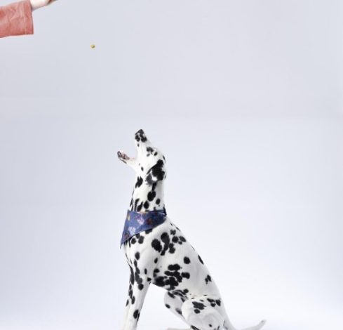 Photo of 5 Benefits of Obedience Training and a Well-Trained Dog