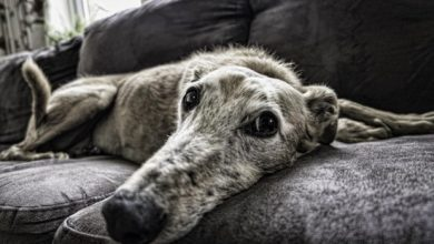 Photo of An Itch That Won't Stop? Here Are 5 Signs of Skin Allergies in Dogs