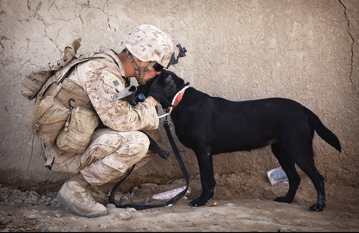 Facts to Know before Taking up an Army Dog for Adoption