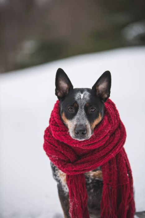 Don't let the cold hamper your Pooch's Winter Fun
