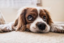 Photo of Reasons To Treat Dog's Anxiety With CBD Oil