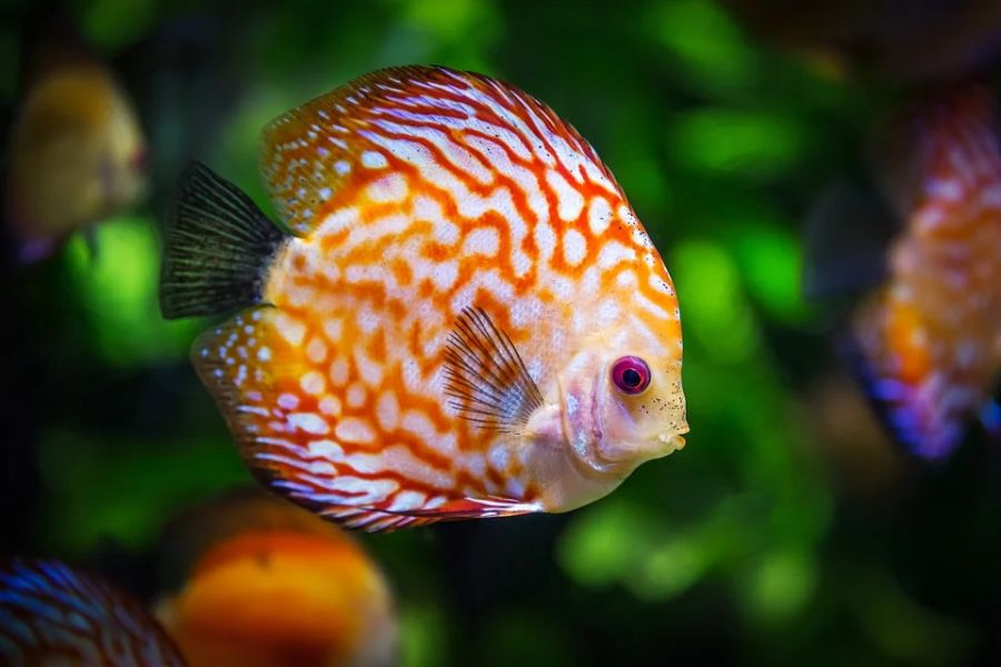 Caring for Fish: A Beginner's Guide