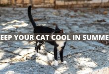 Photo of Top tips to keep your cat cool in the summer