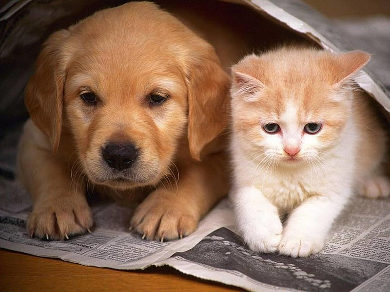 Puppies and Kittens, My Oh My Which Pet Is Better for Your Household